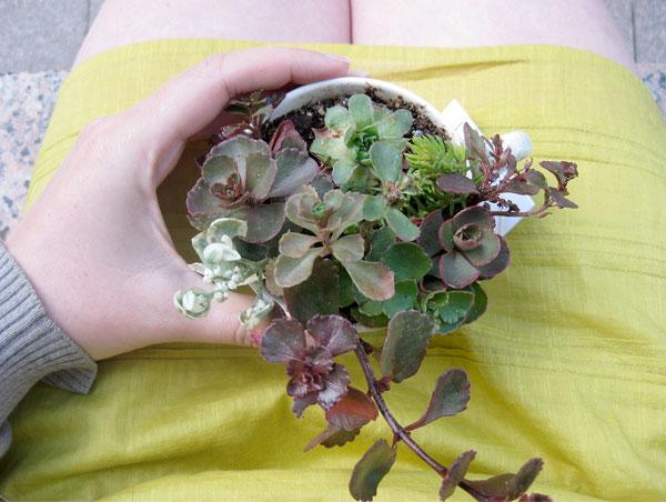 repursposed teacup planter