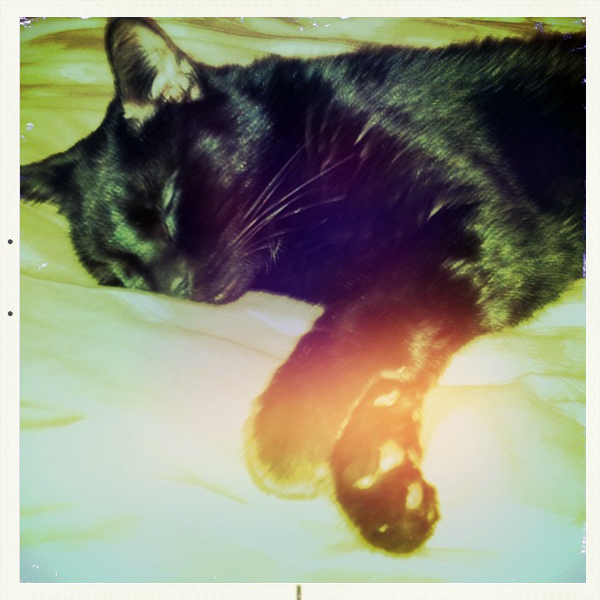 Westervin Wear: Fitgeral Westervin, sleeping black cat