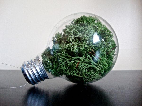 lightbulb terrarium ornament