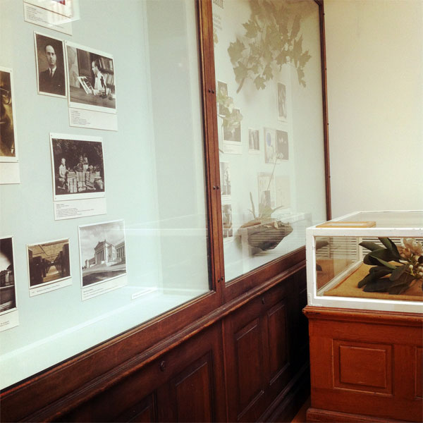 botany displays at the Field Museum