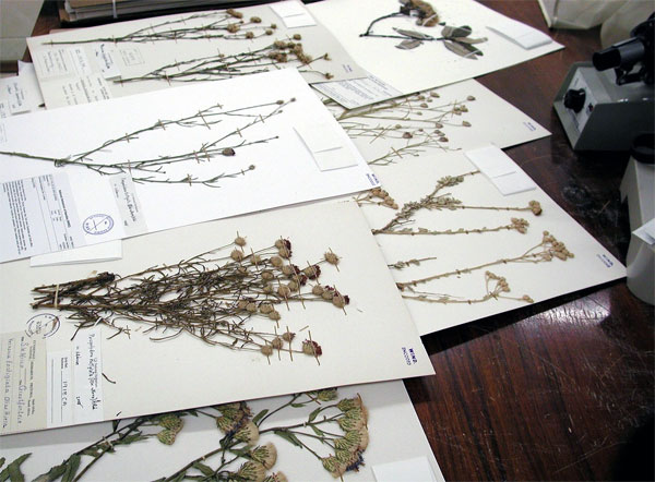 Herbarium display at the Smithsonian Institute