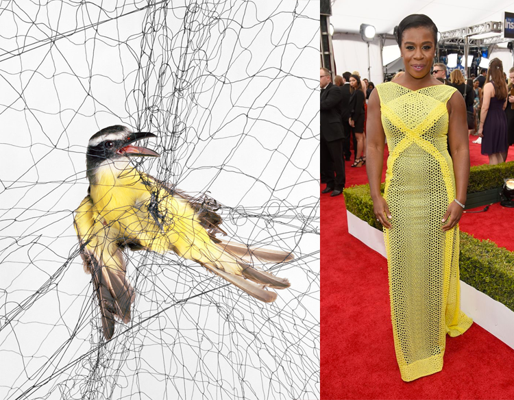 Boat-billed Flycatcher (Megarynchus pitangua) by Todd R. Forsgren; Uzo Aduba at the 21st Annual Screen Actors Guild Awards